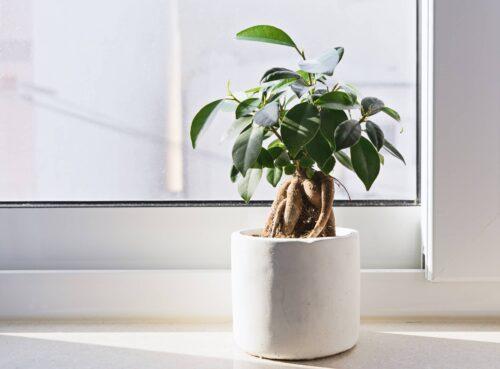 comment créer un bonsai