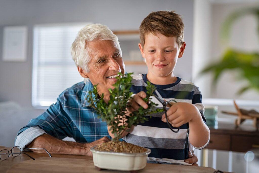 Comment tailler un bonsaï